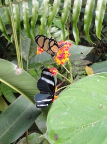 Butterflies are specialized for distinct species of plants.